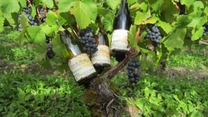 Côtes de Meuse Rouge,Gris et Blanc + vigne